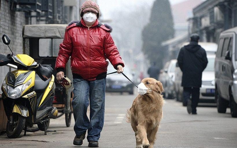 inquinamento animali